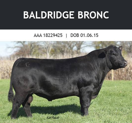 Baldridge Bronc