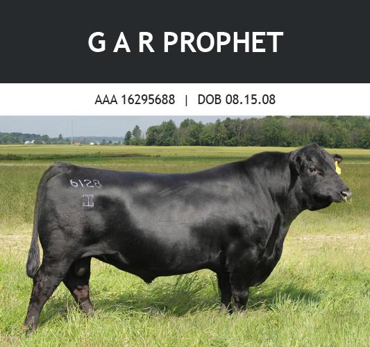 GAR Prophet