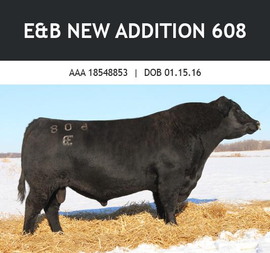 E&B New Addition 608